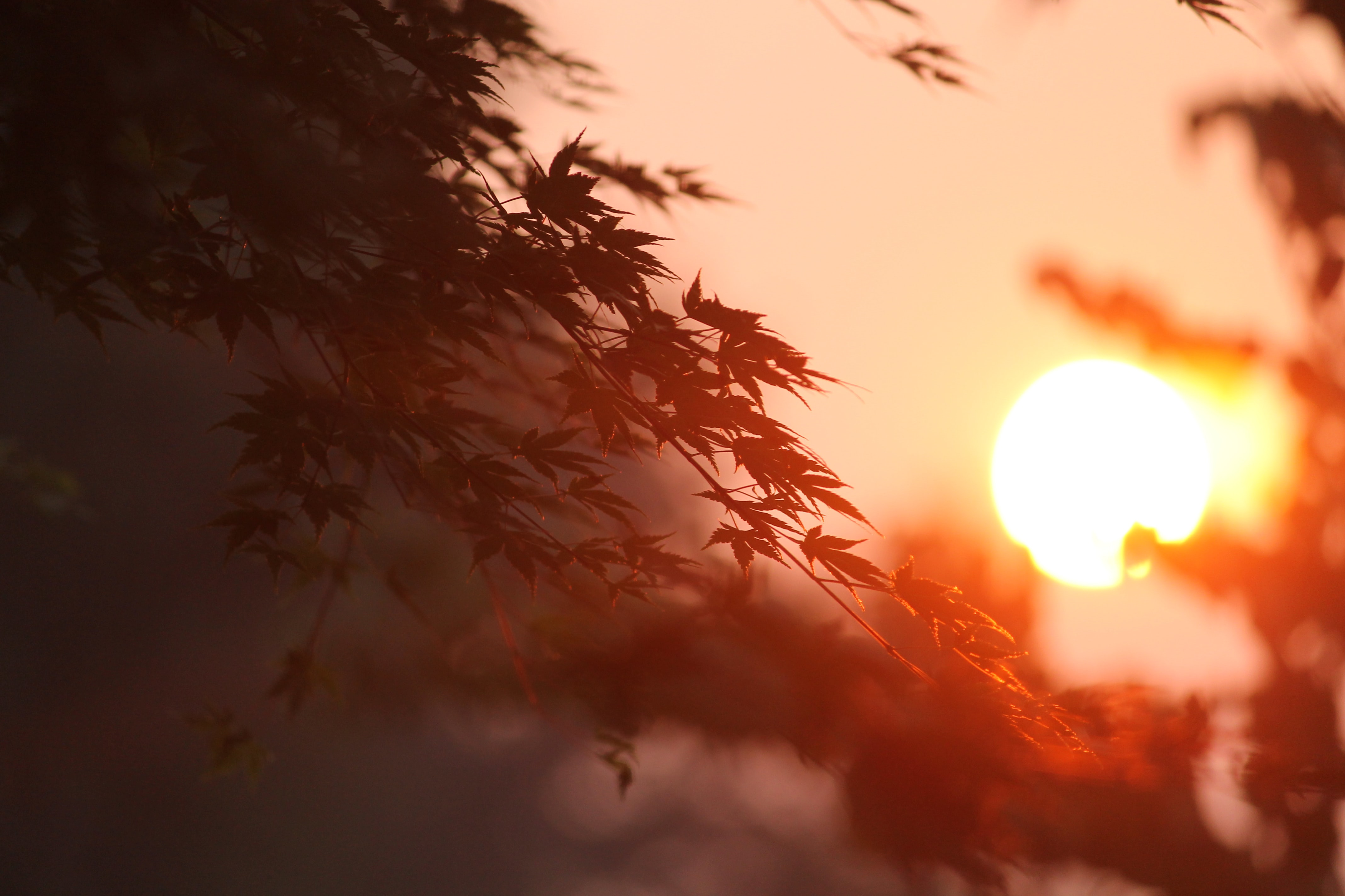 closeup photography of tree leaves under sunset