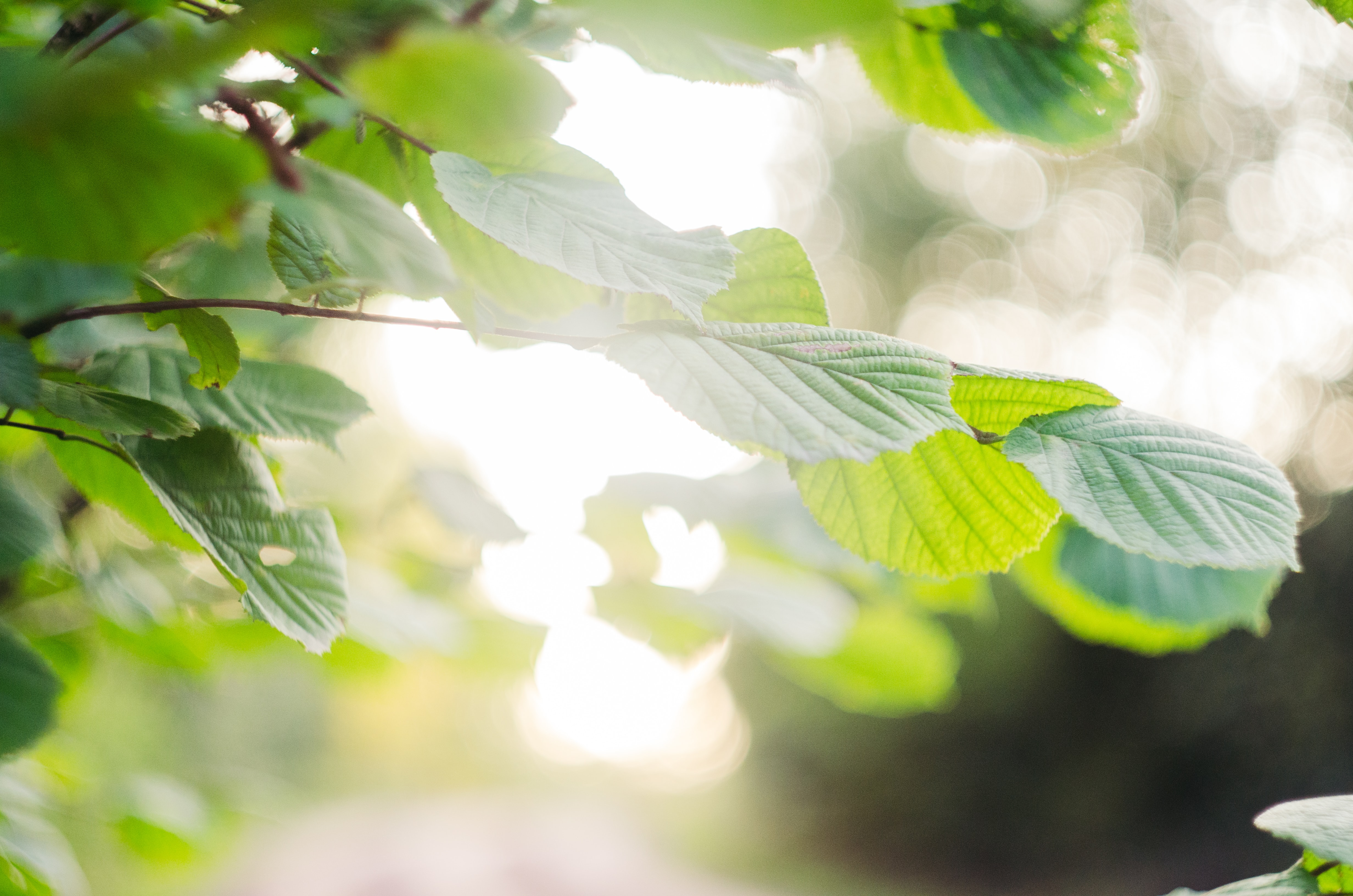 selective focus photography of green tree leaves