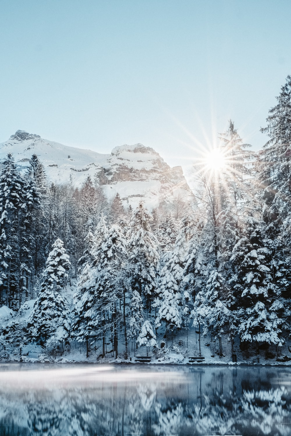 pine trees covered with snow during daytime