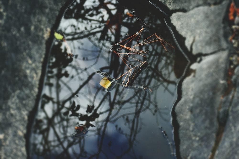 closeup photo of black spider
