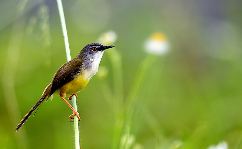 wildlife photography of green and yellow bird