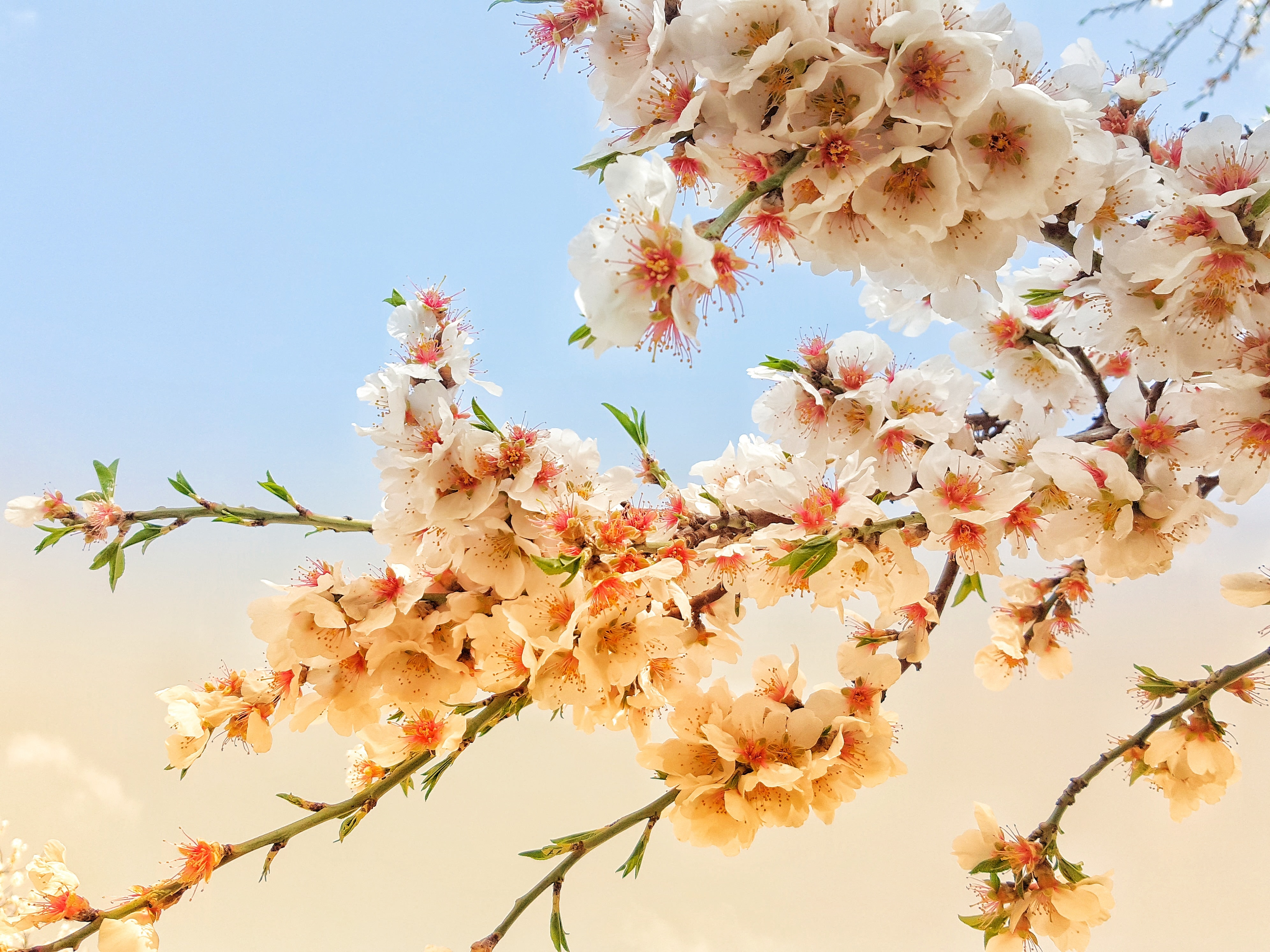 pink and white flowers under cloudy sky