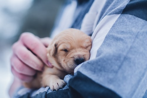 Importance Of Puppy Daycare