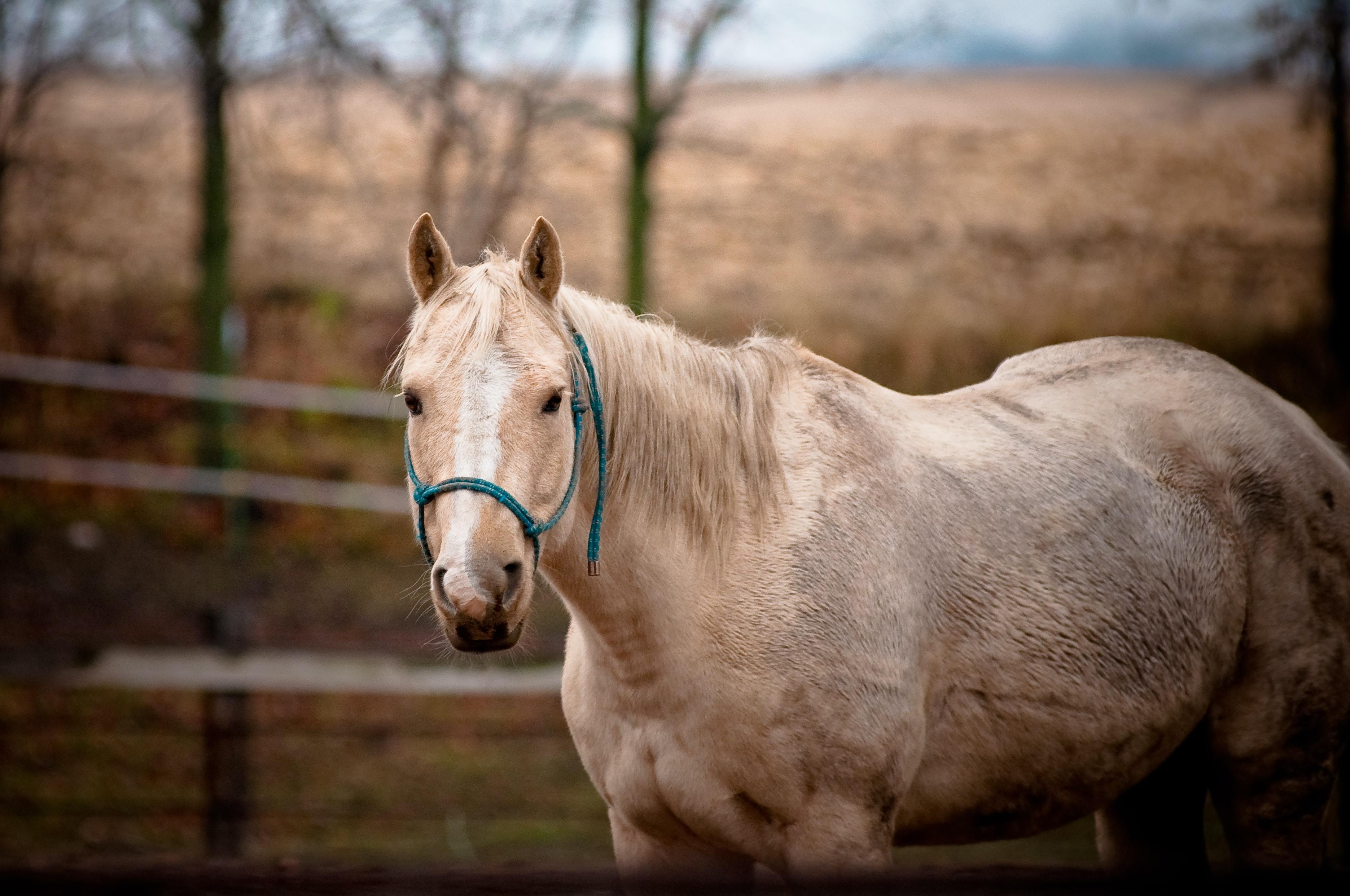 brown horse standing in field