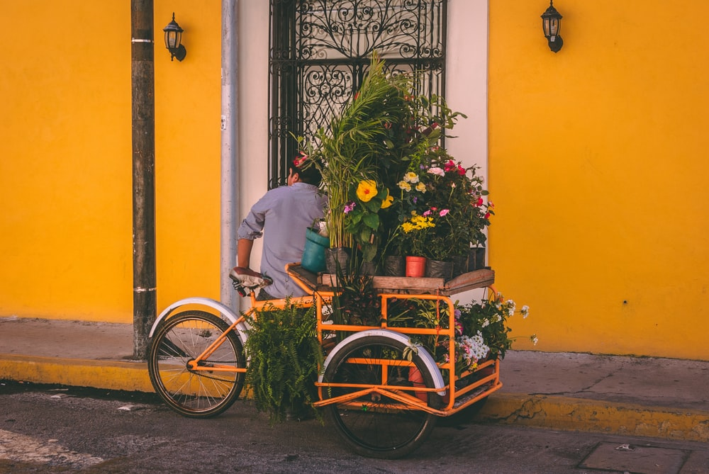 man standing near yellow trike with pots of flowers