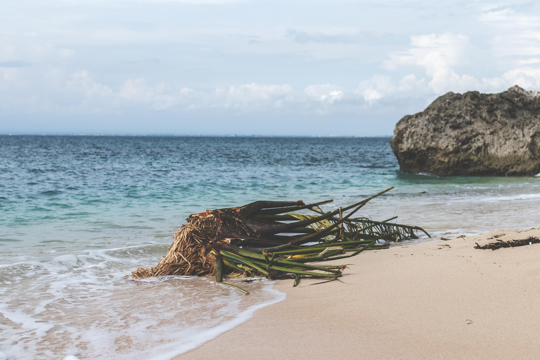 green leaf plant on seashore near stone at daytime