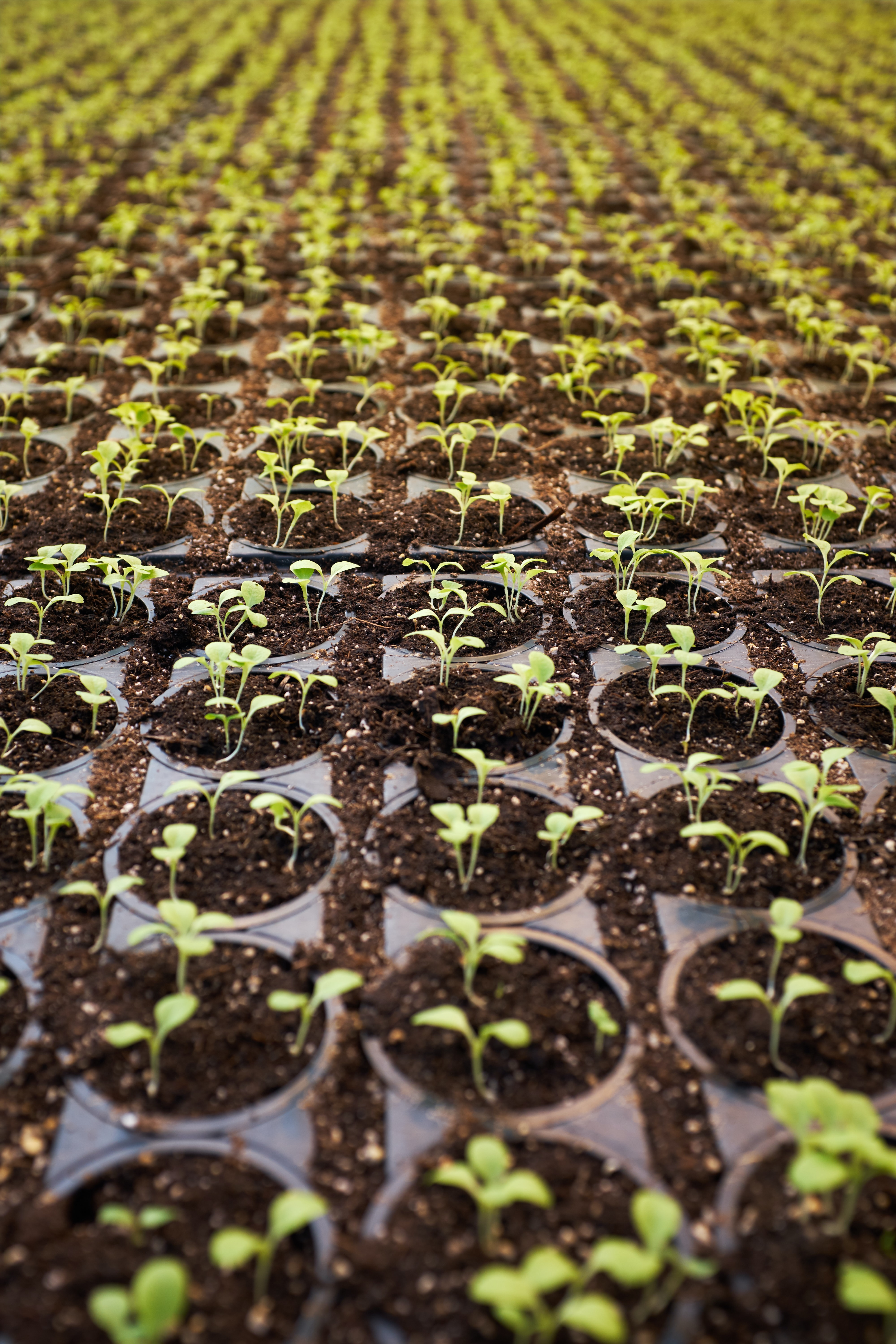 green leafed plant field planted on brown soil