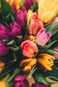 Spring Haikus (A collection!) poetry stories