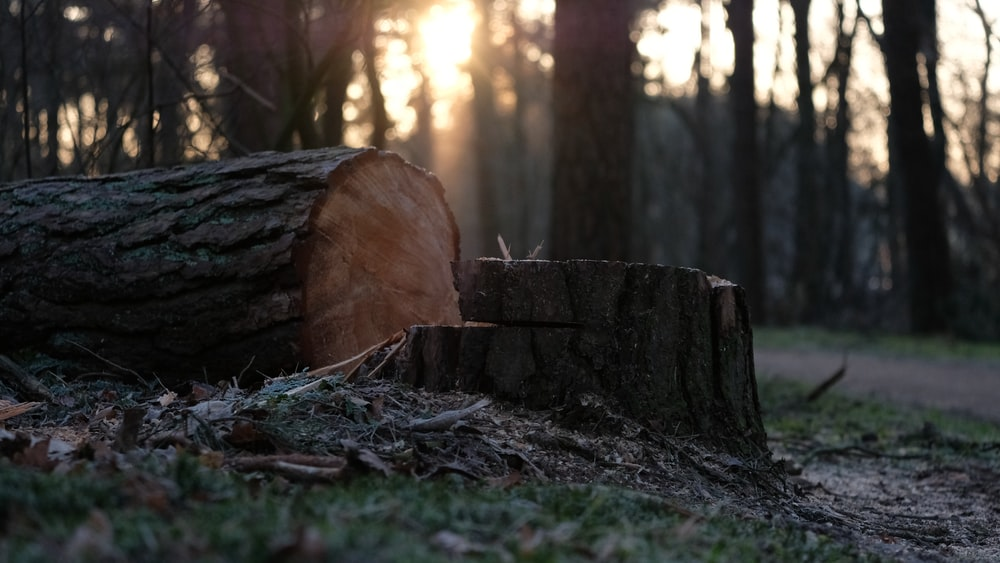 brown cut tree log