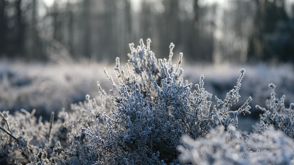 closeup photo of plant filled with snow