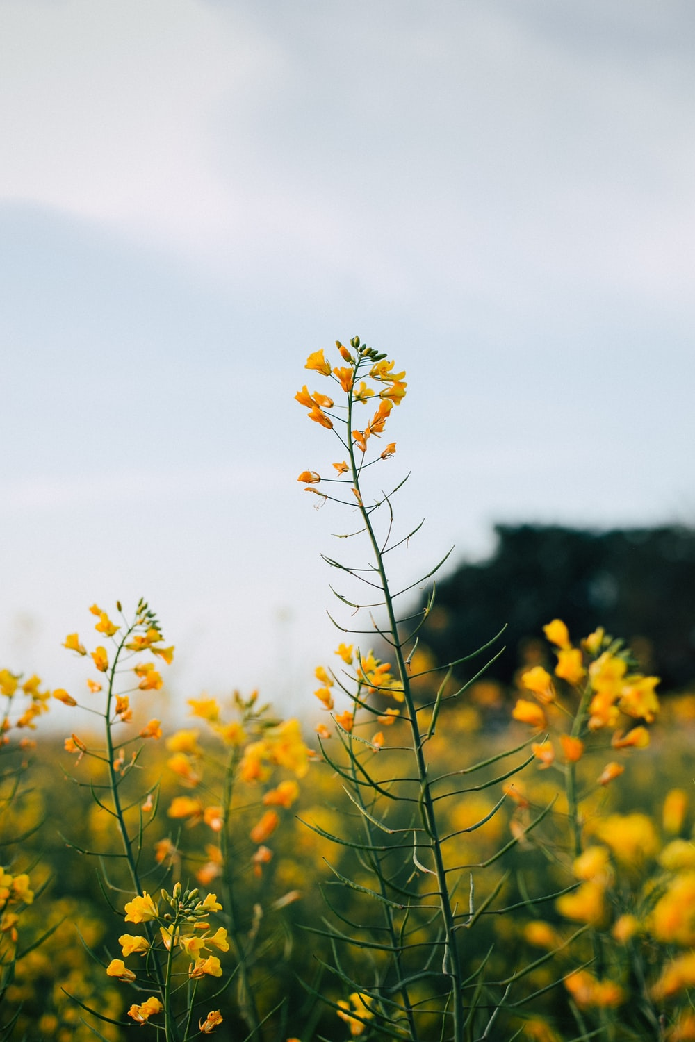 Yellow Flower Pictures Hq Download Free Images On Unsplash