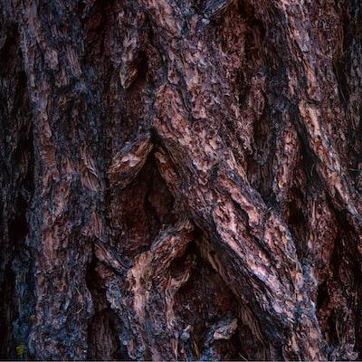 brown tree trunk