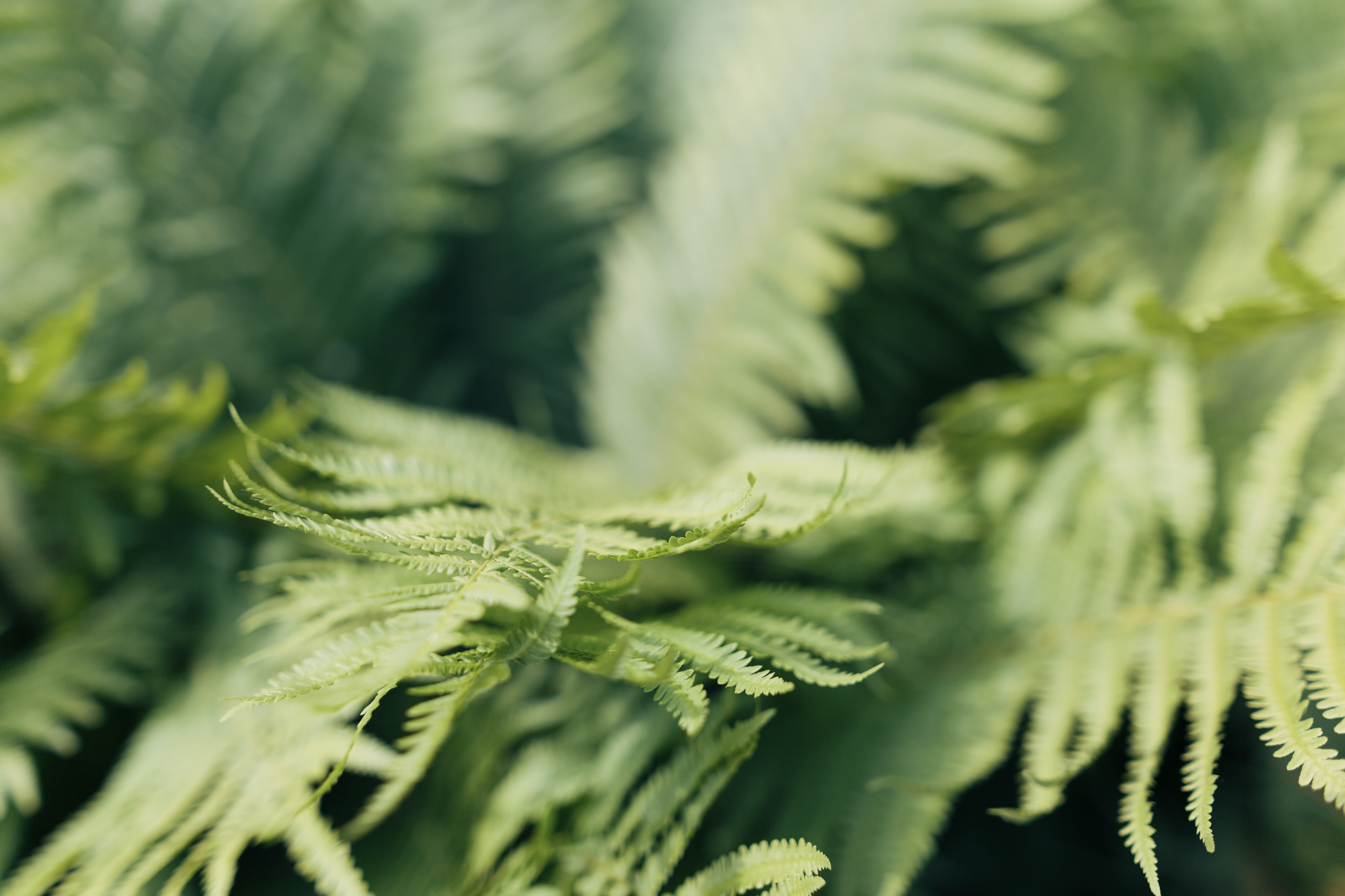 selective focus photo of fern plant