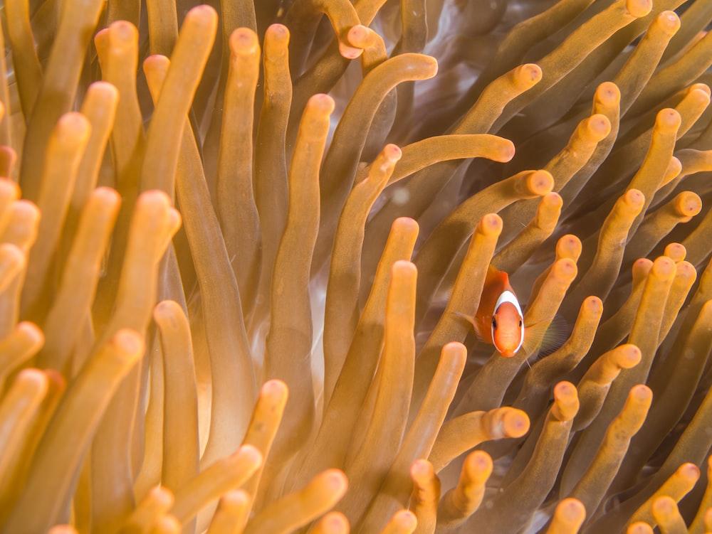 clown fish underwater