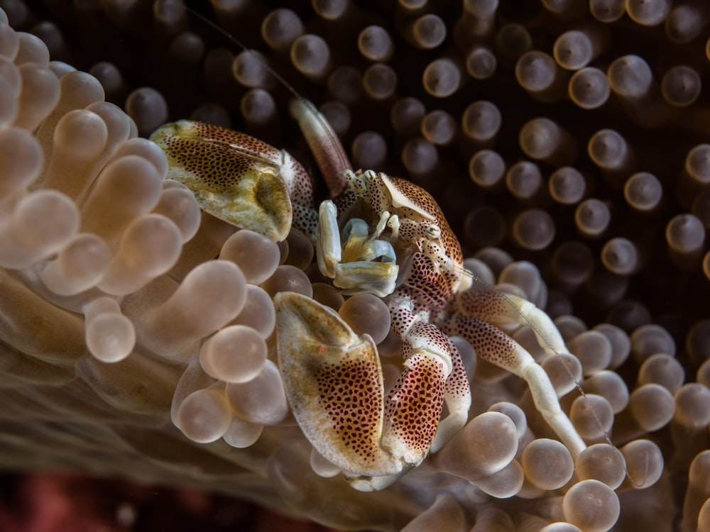 macro photography of crab on seafloor