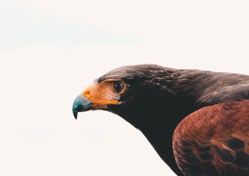 focus photo of bird