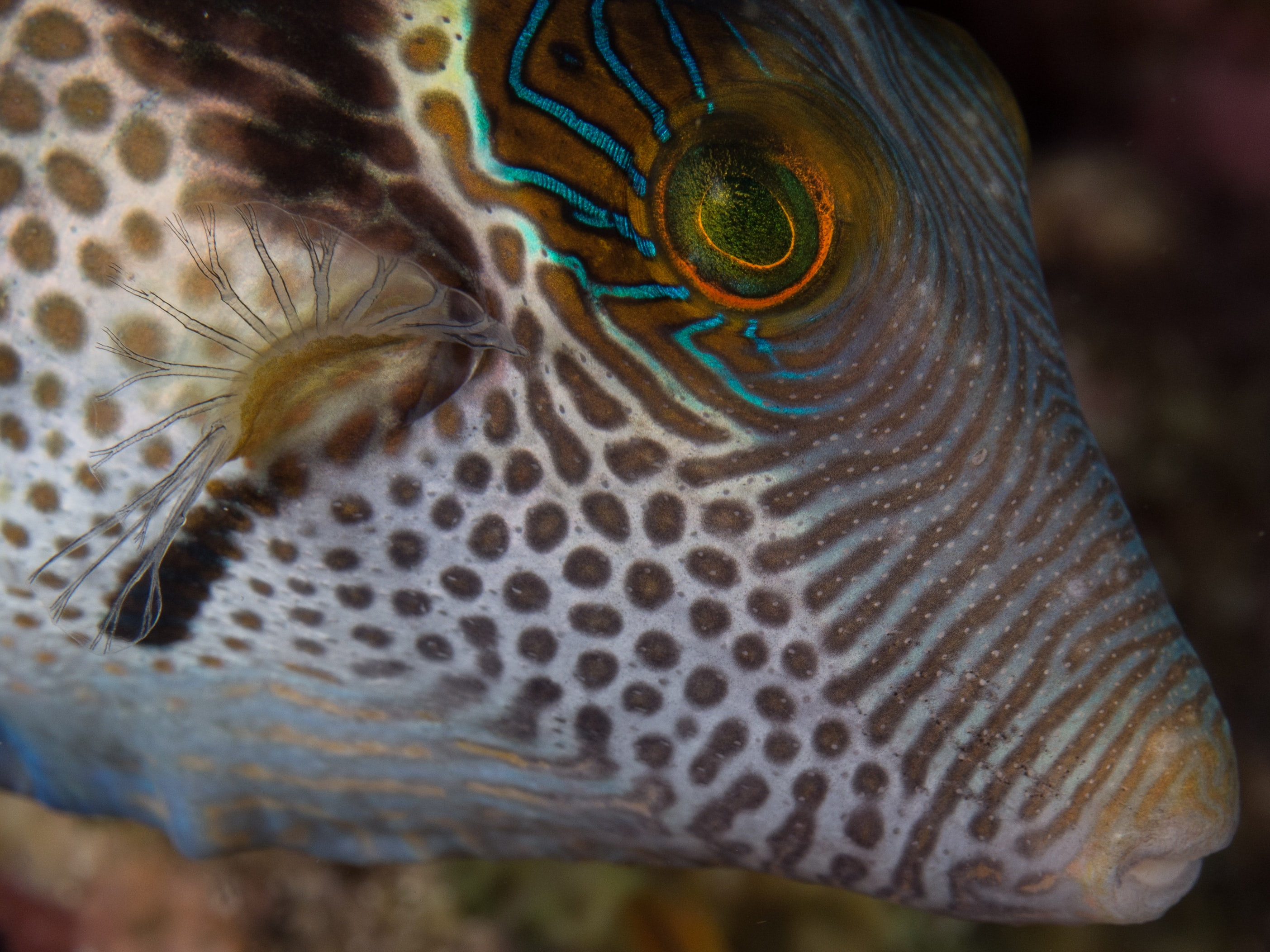 close-up photograph of multicolored fish