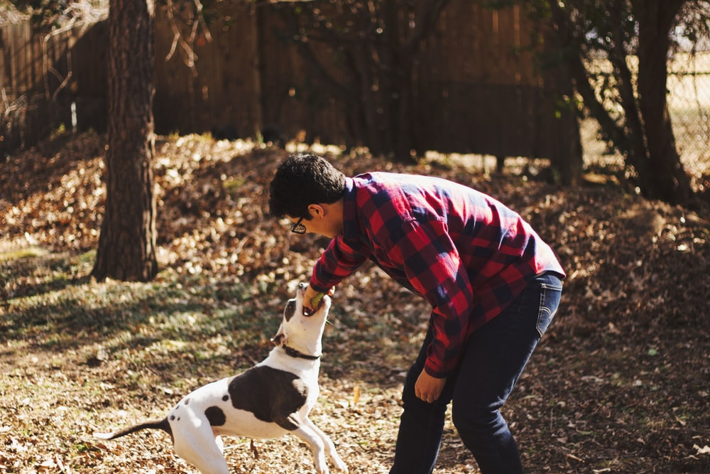 Tips To Keep Your Dog Healthy And Fit