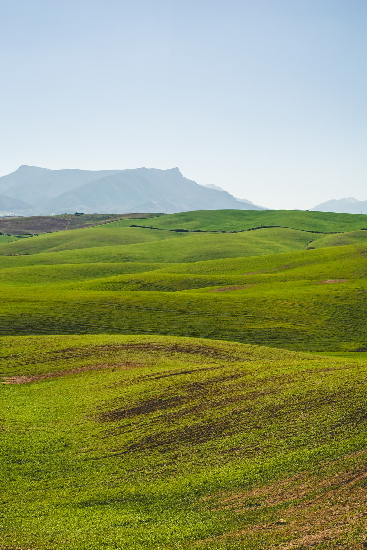 green grassland under clear sky
