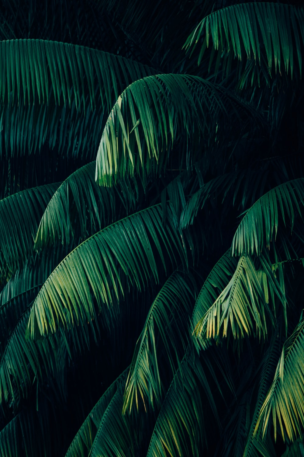 Green Fern Photo Free Plant Image On Unsplash