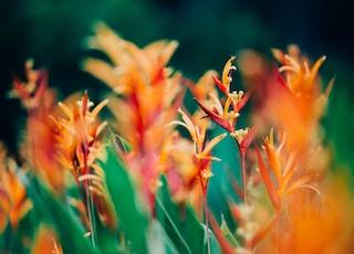 shallow focus photography of orange flowers under sunny sky