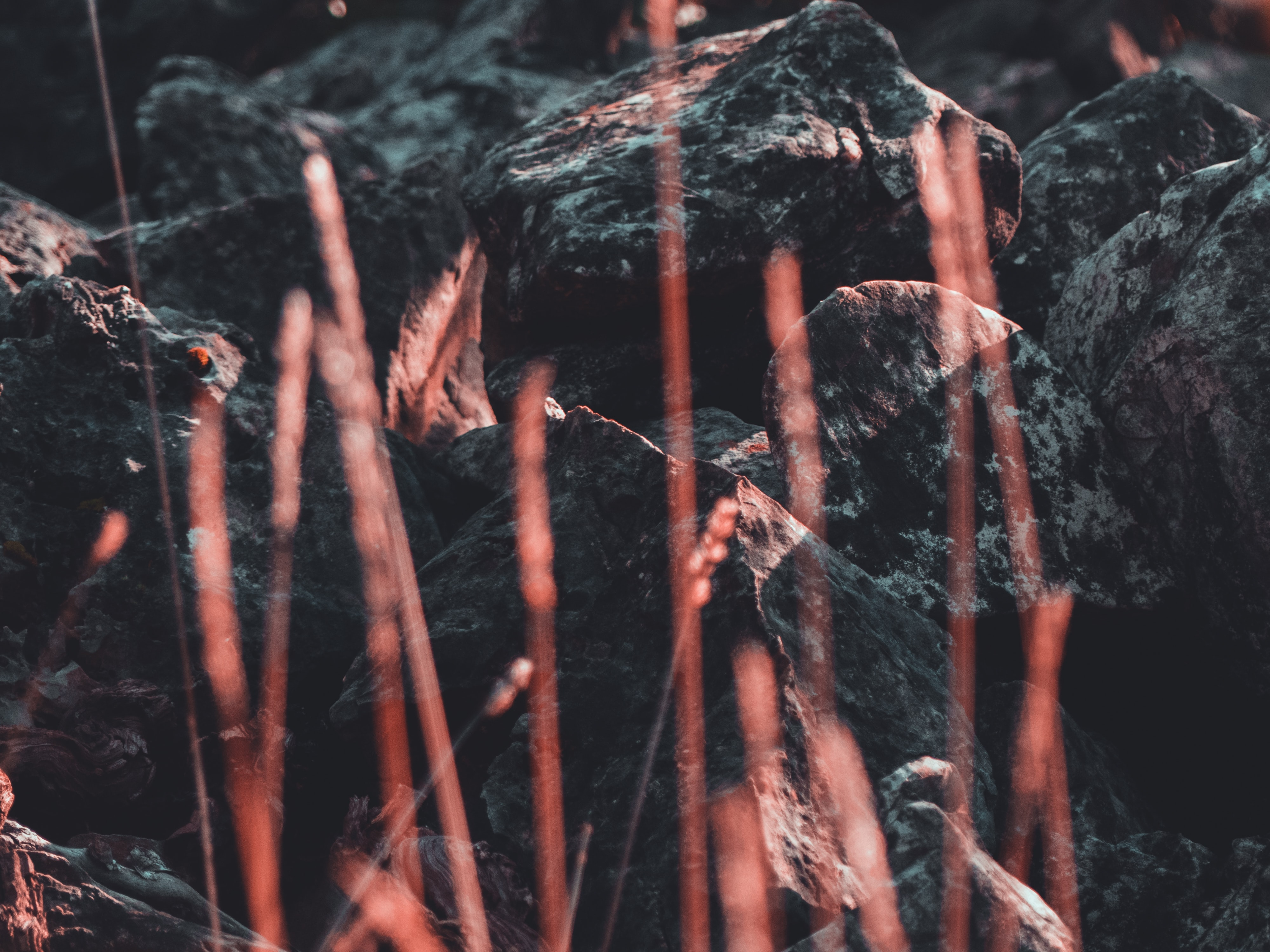 grasses near rocks