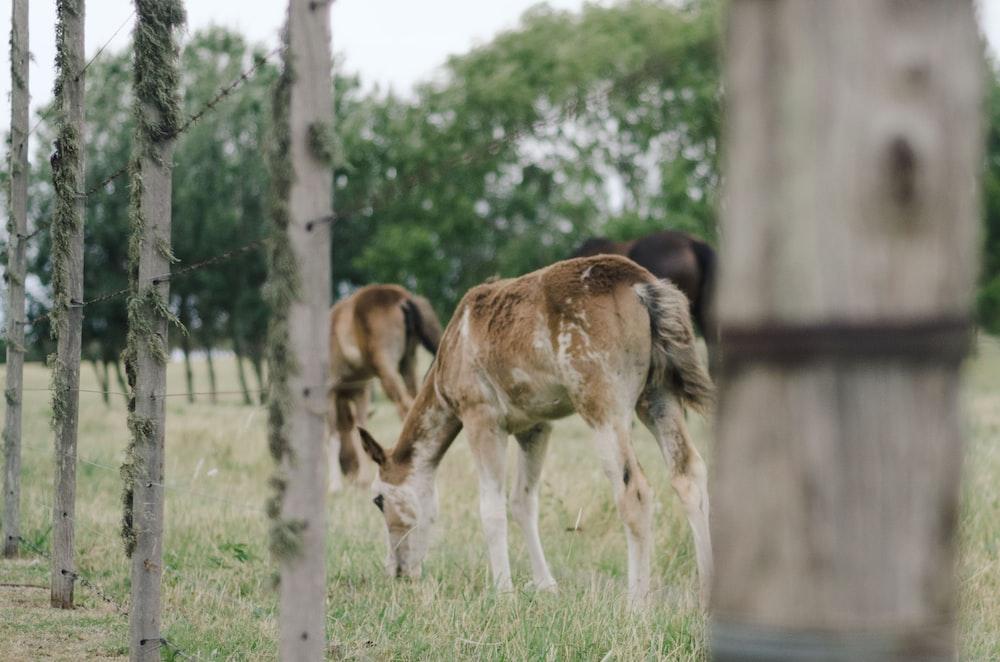 selective focus photography of baby giraffe eating green grass