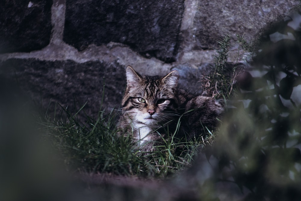 selective focus photography of brown cat