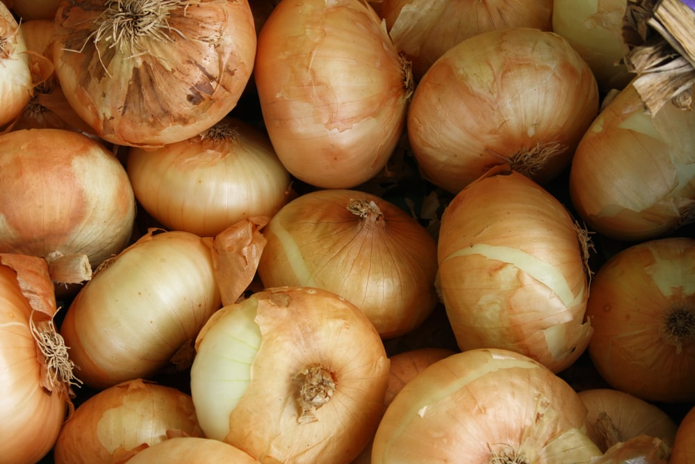 brown onion lot