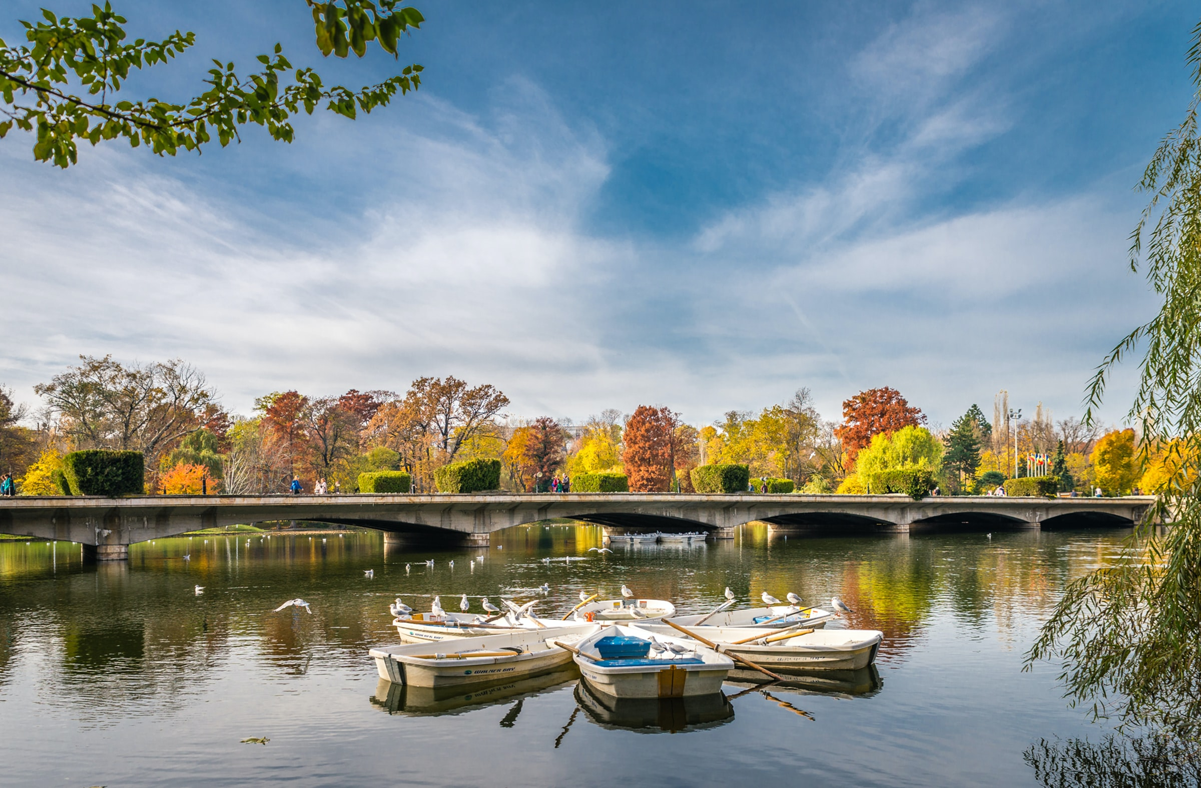five rowboats on body of water in distant of concrete bridge and trees