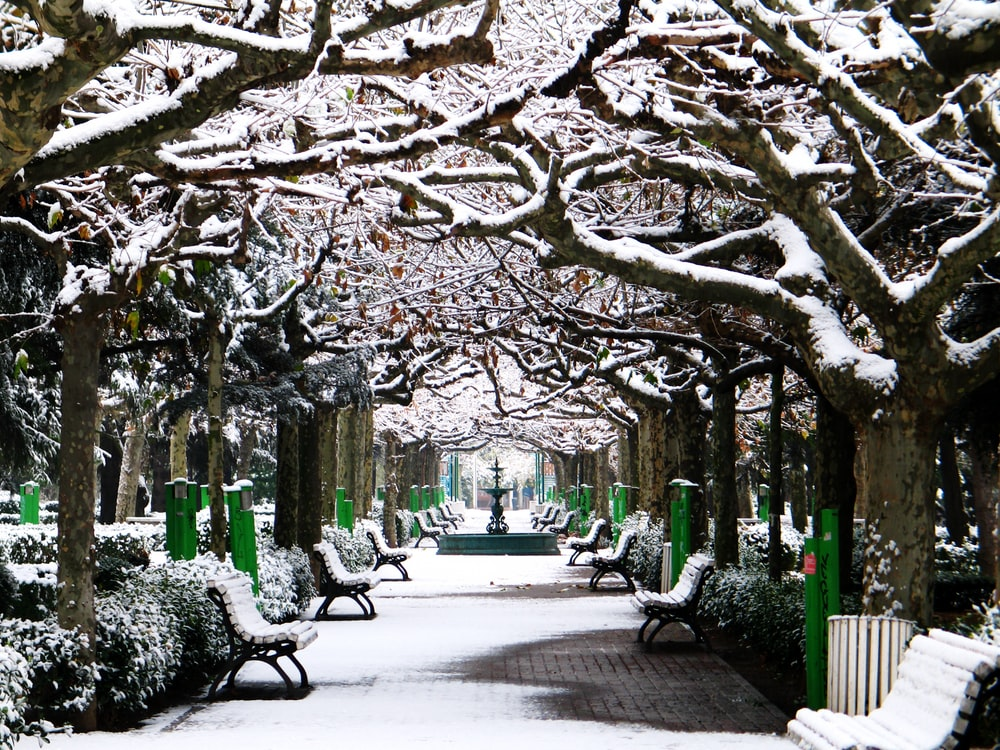trees covered with snows near bench