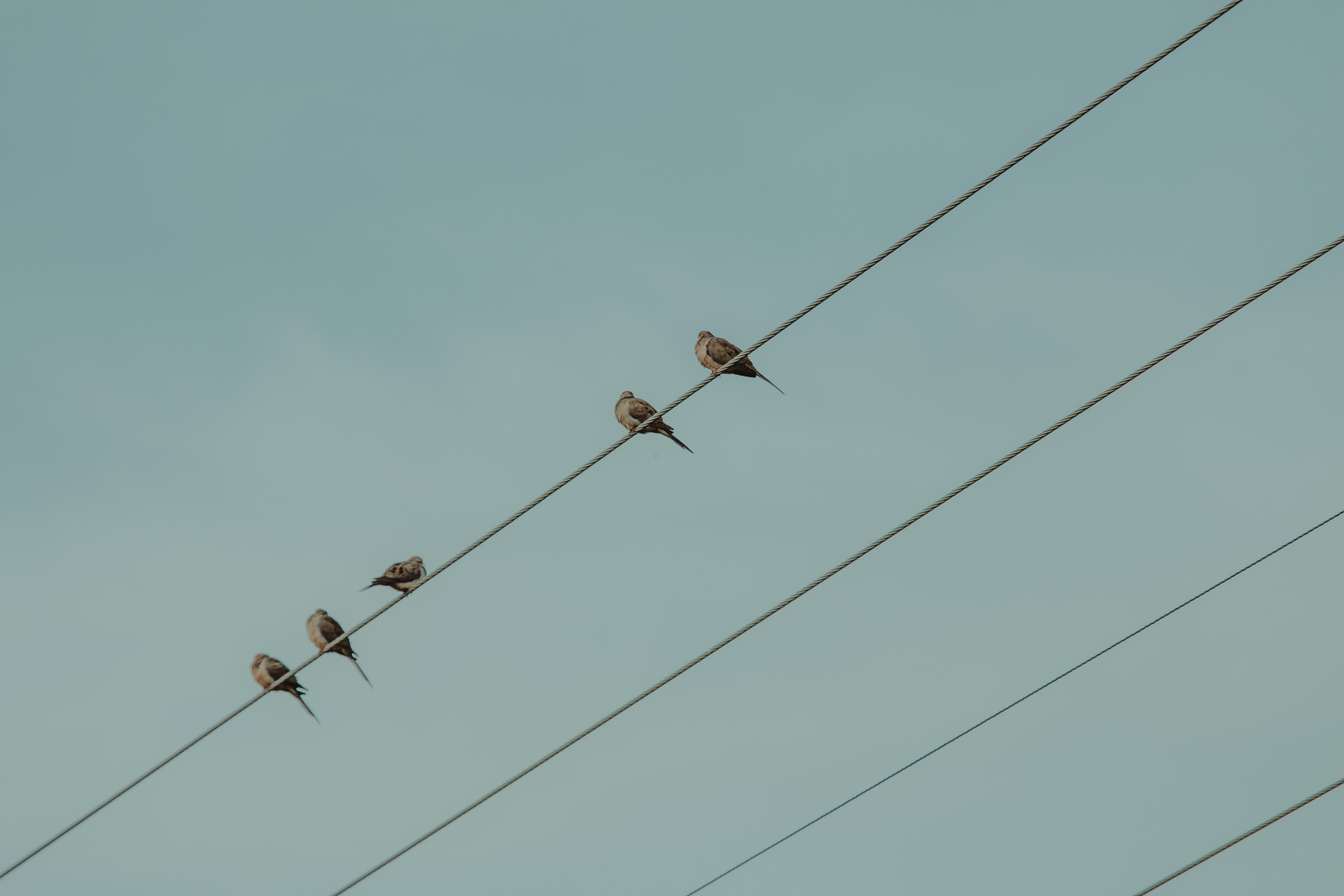 five brown birds on cable under blue sky