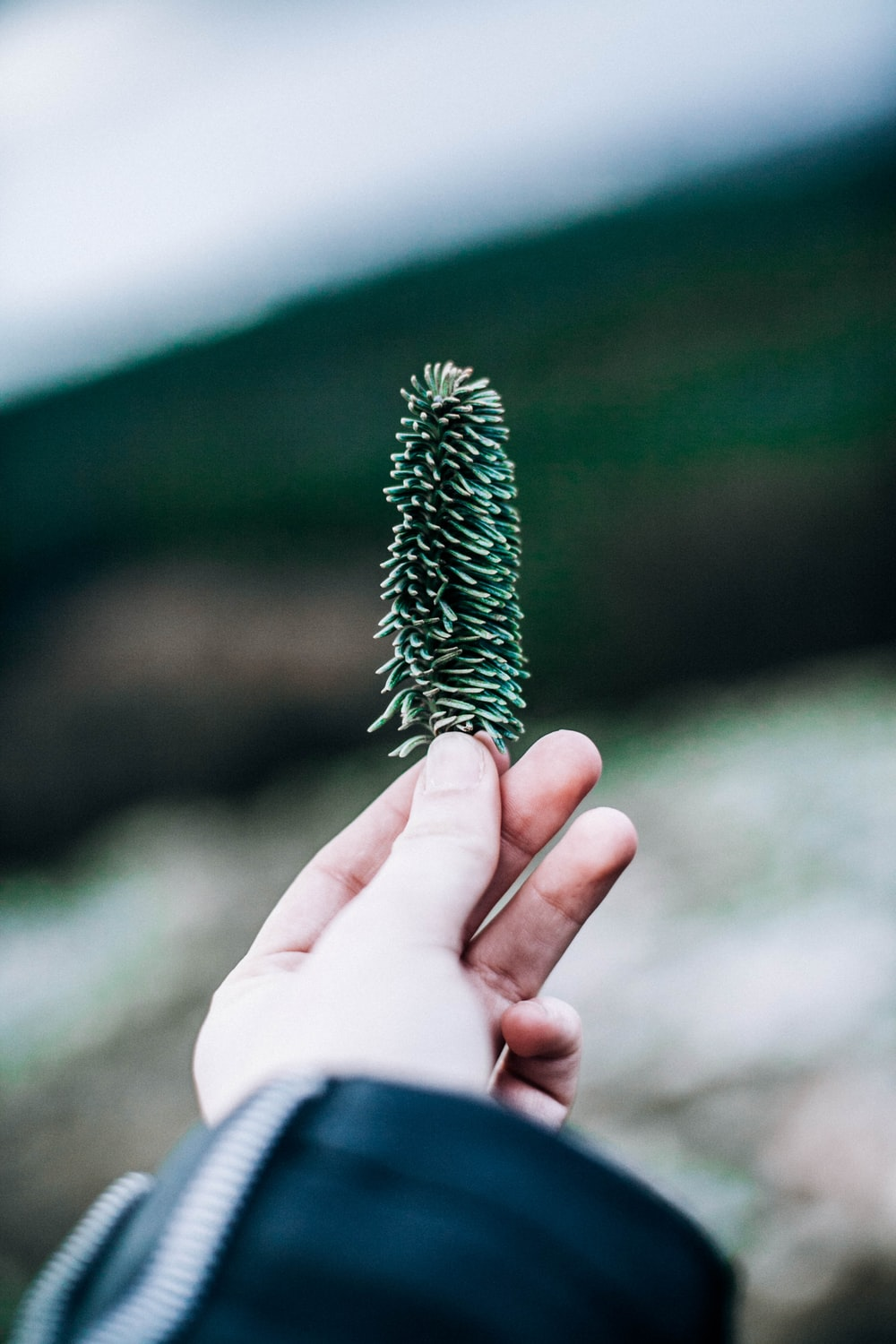 person holding green leaf plant closeup photography