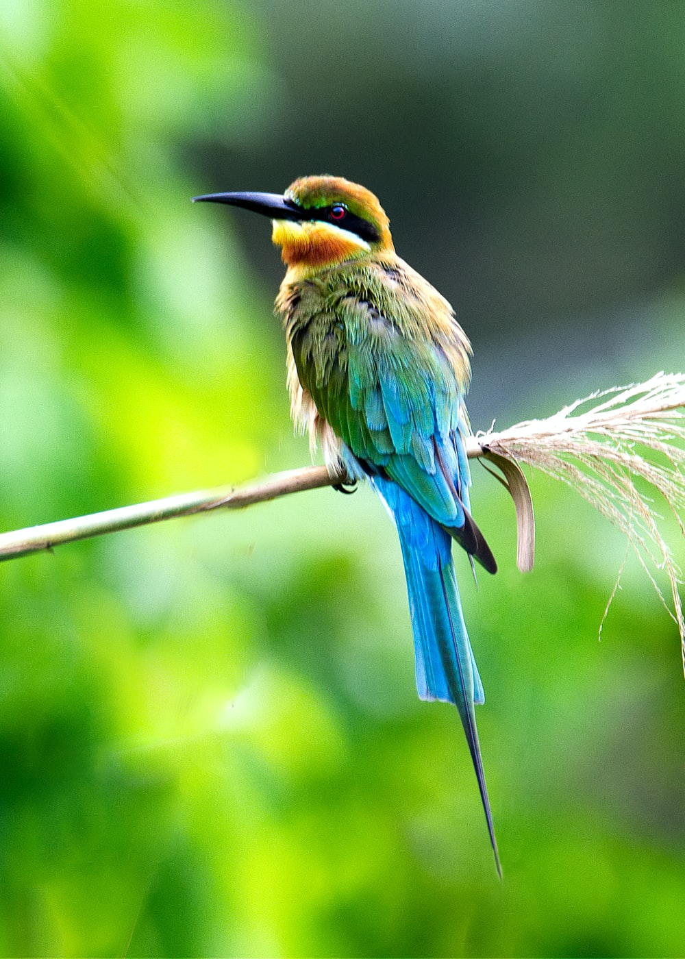 blue, yellow, and green long beaked bird on branch at daytime