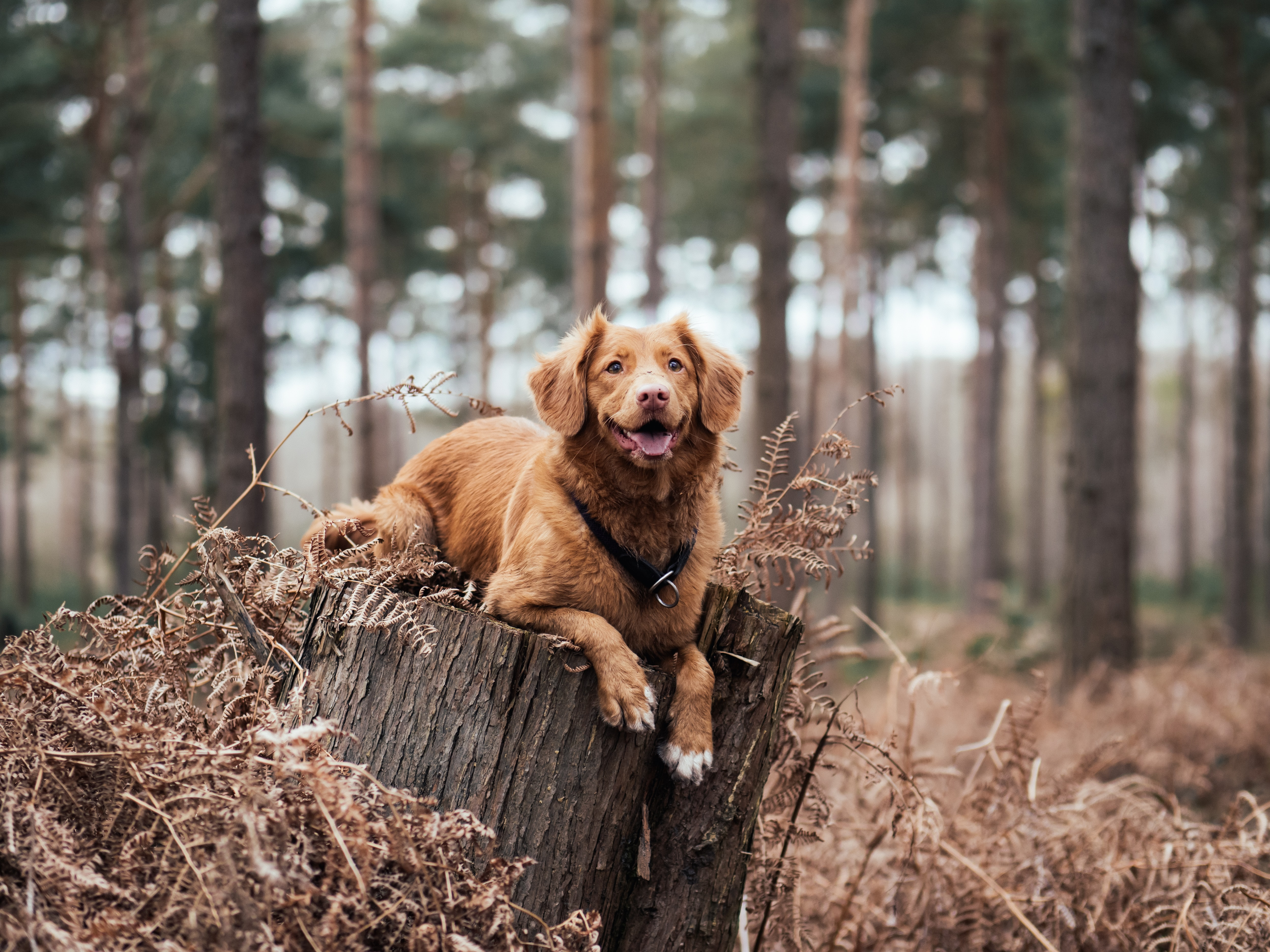 shallow focus photography of brown dog on tree trunk