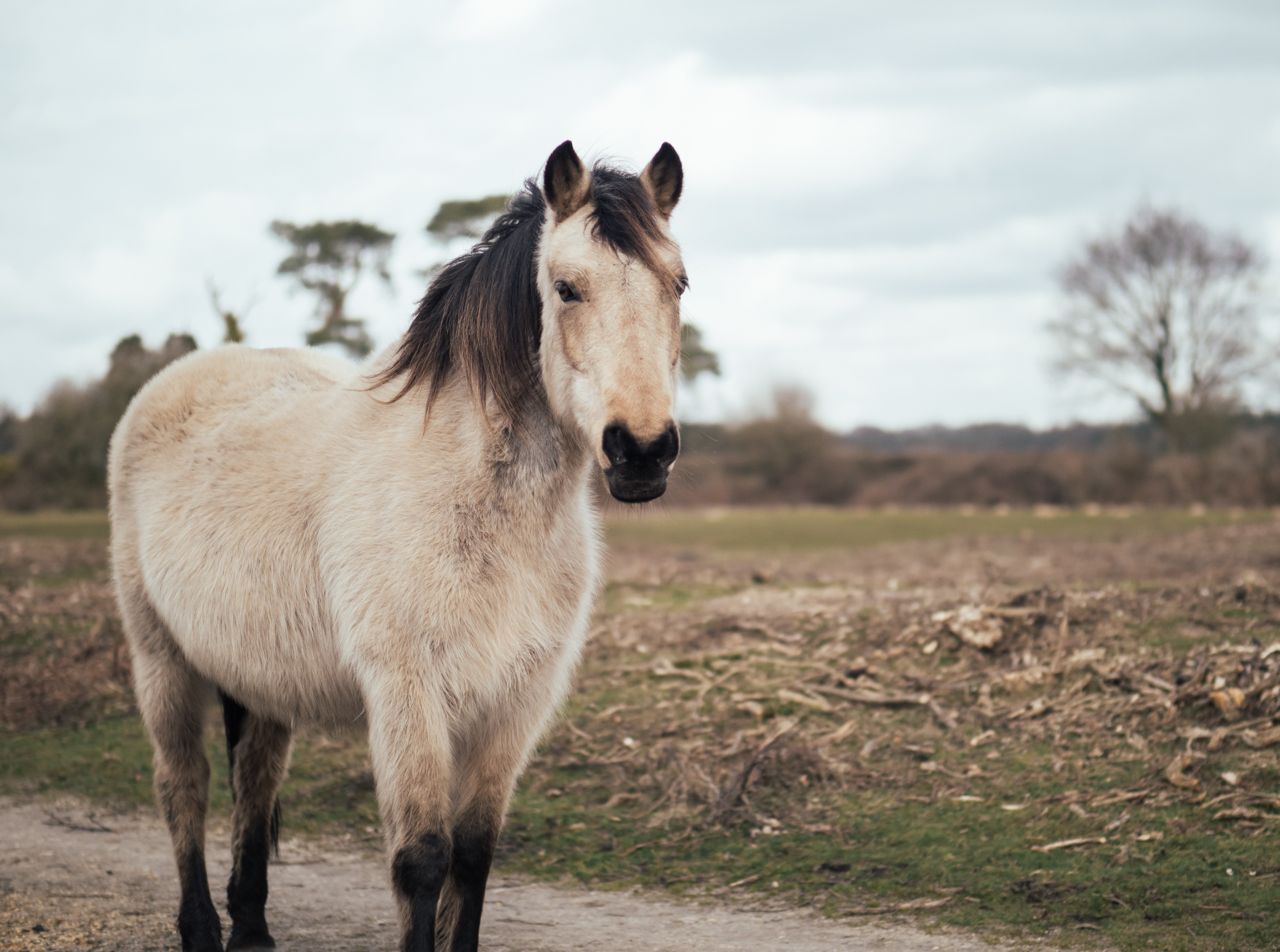 photography of black and beige pony standing on pathway near grass field