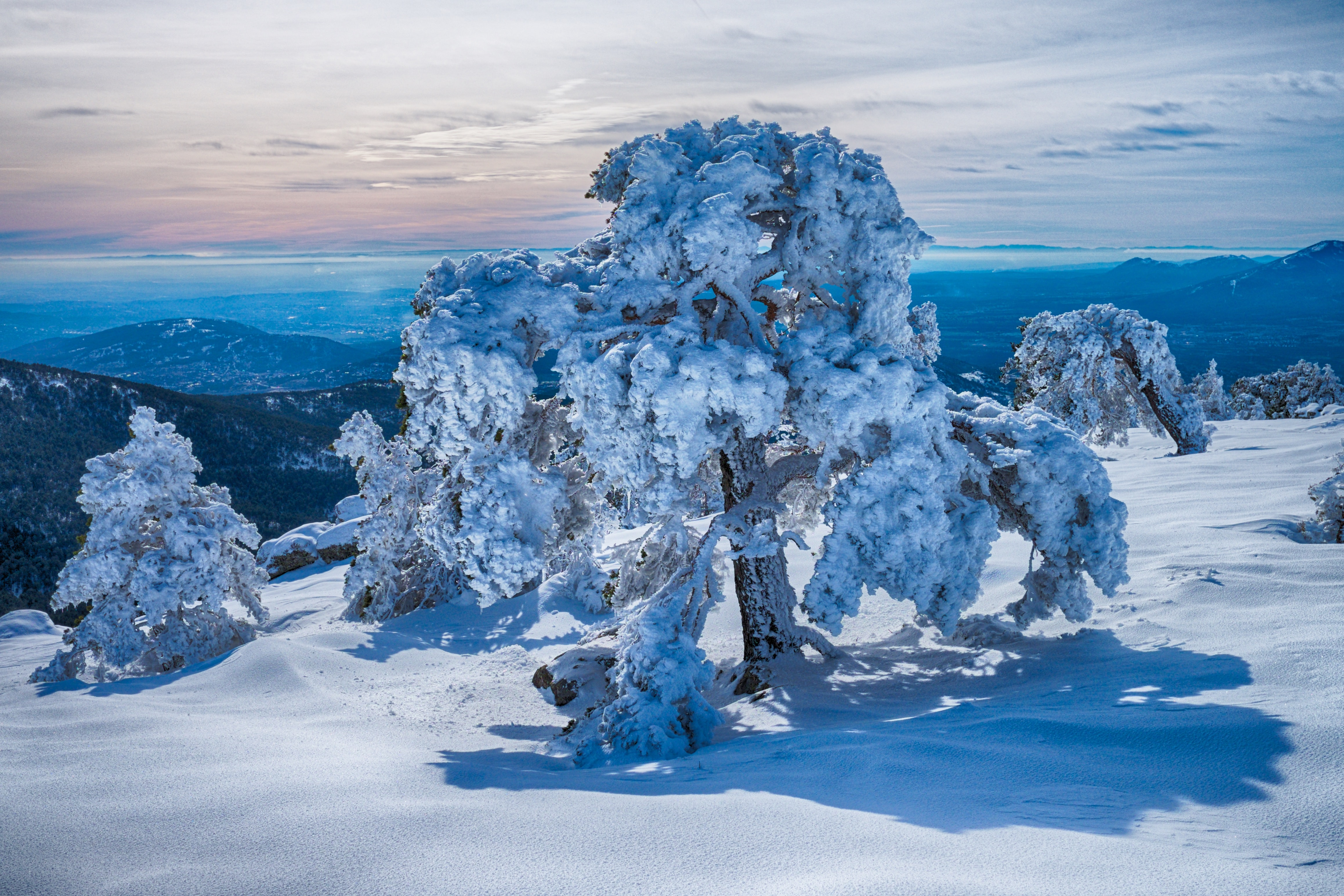 tree covered in snow during daytime