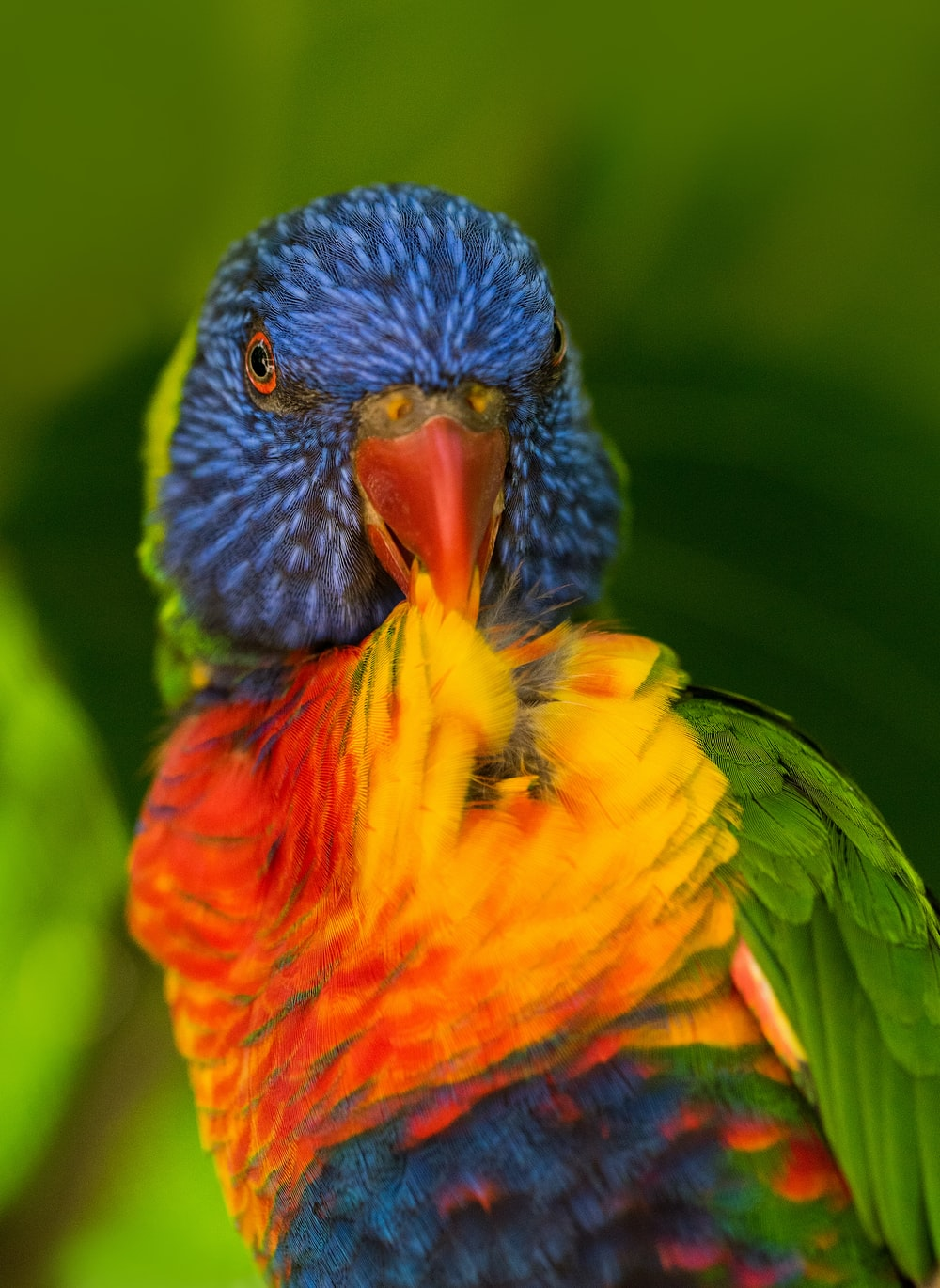 shallow focus photography of multicolored bird