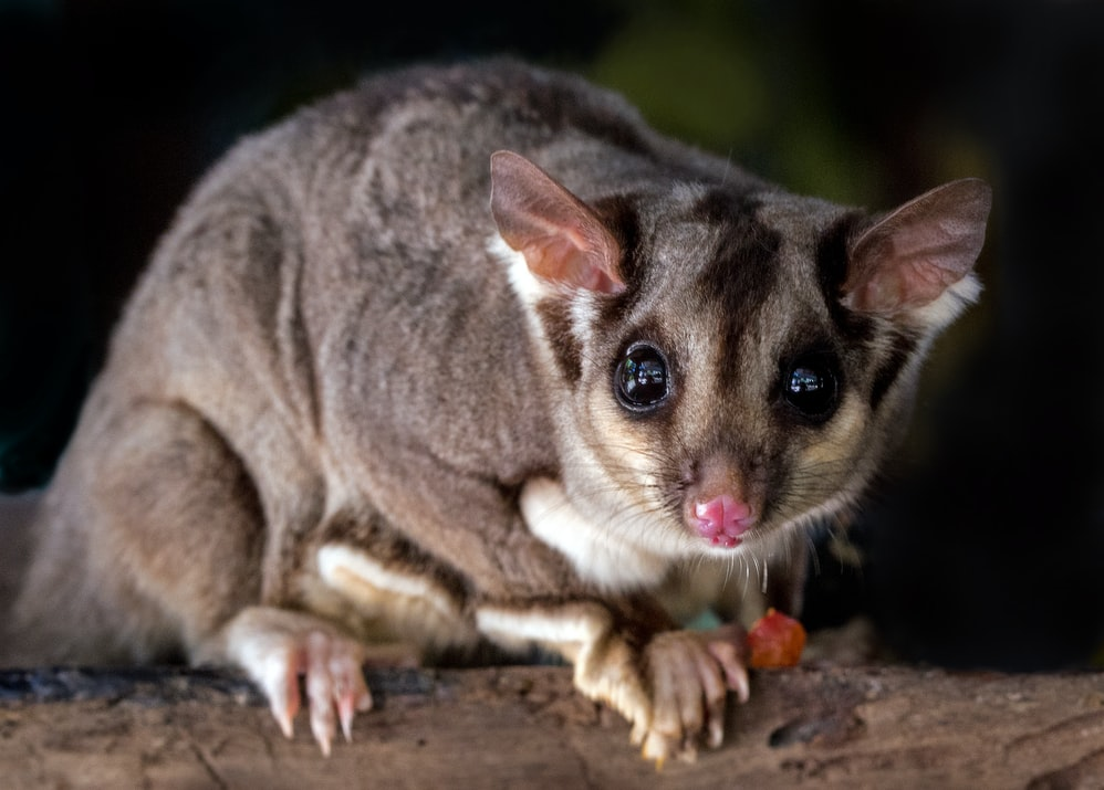 An animal in Australia