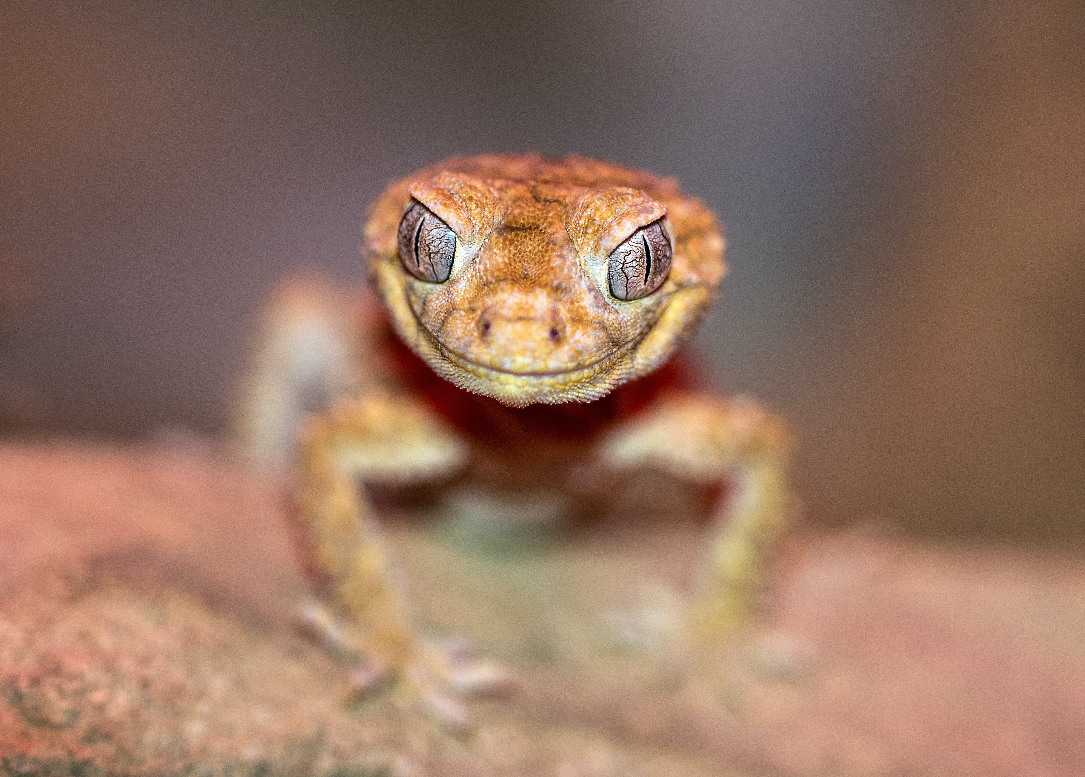 close-up photo of brown lizard