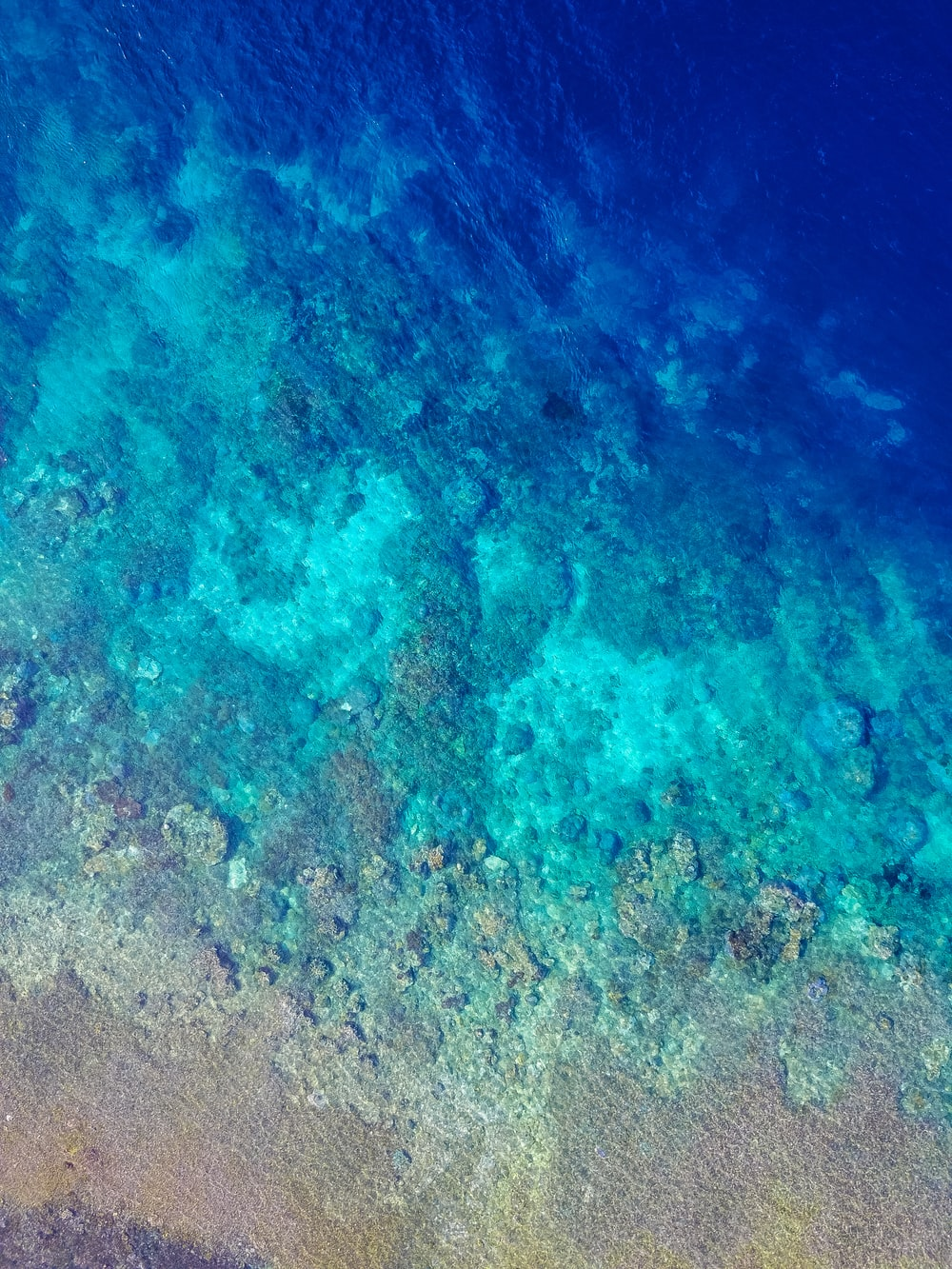 flat-way photograph of underwater corrals