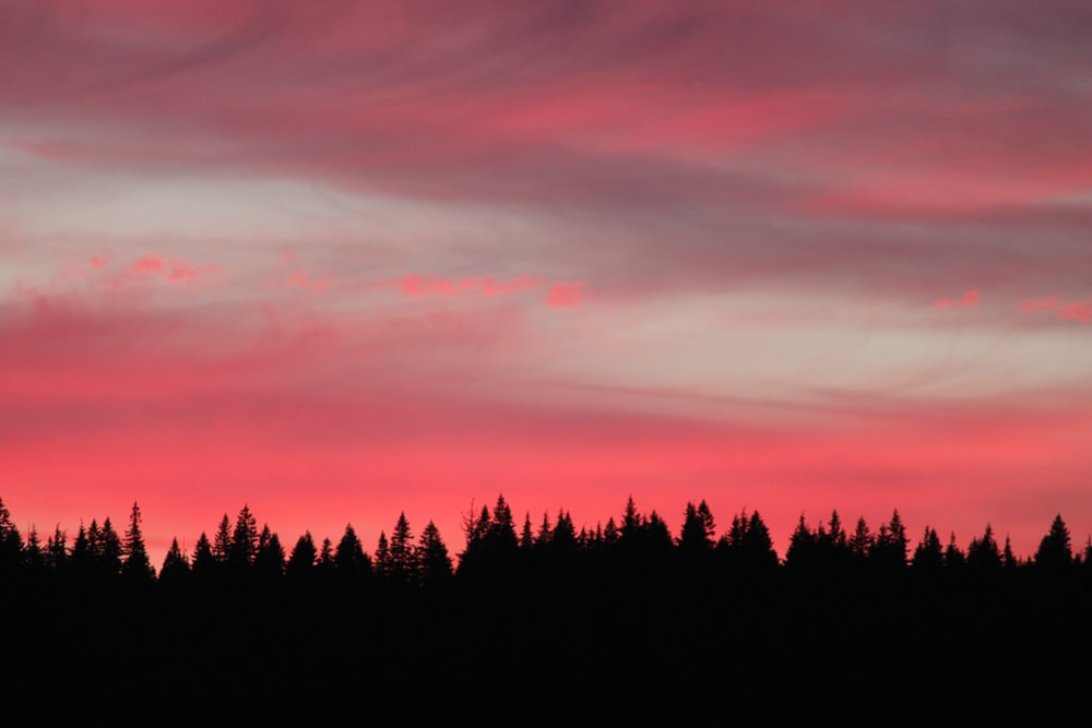 silhouette photography of forest during sunsety