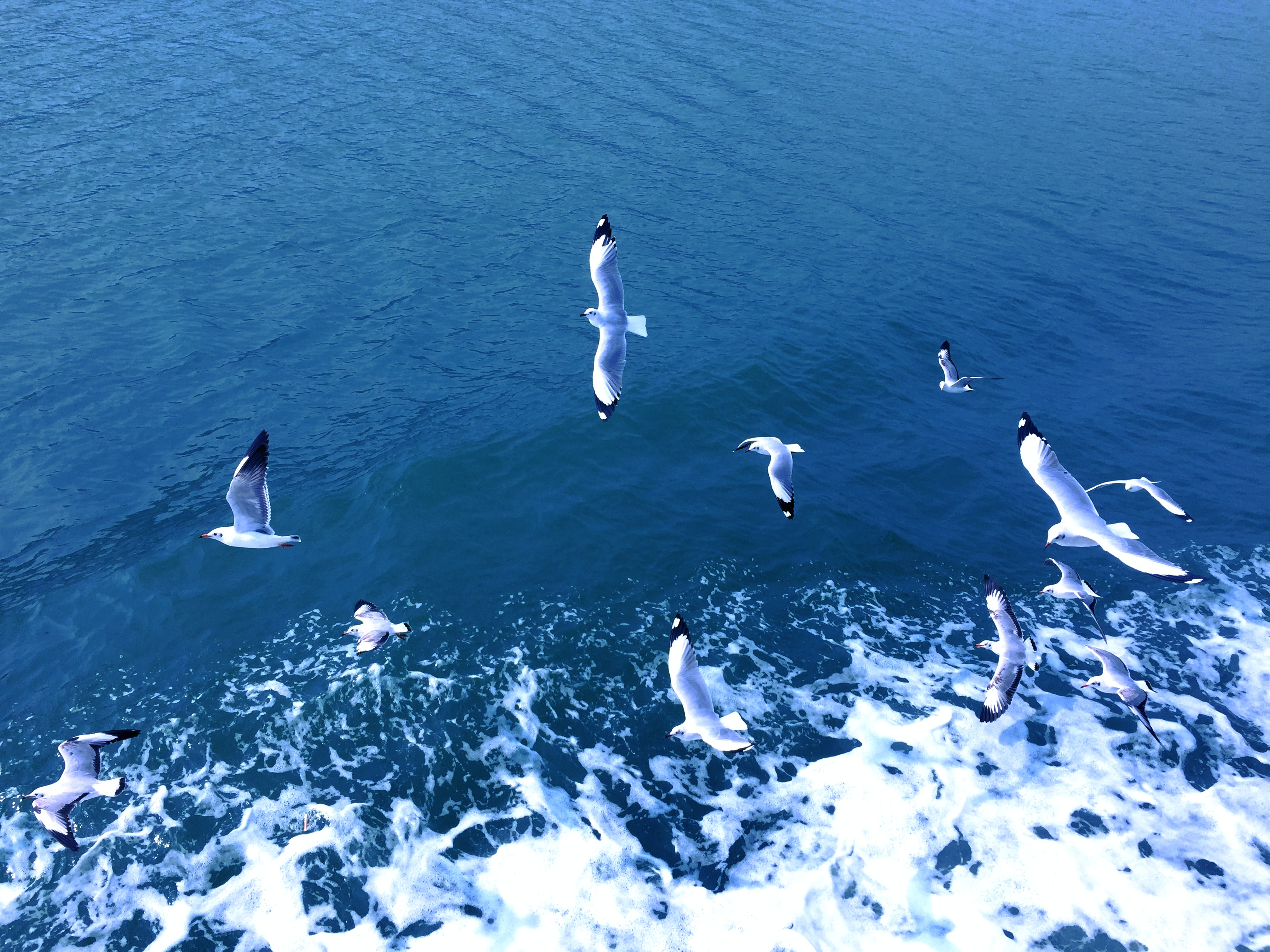 flock of albatross near body of water