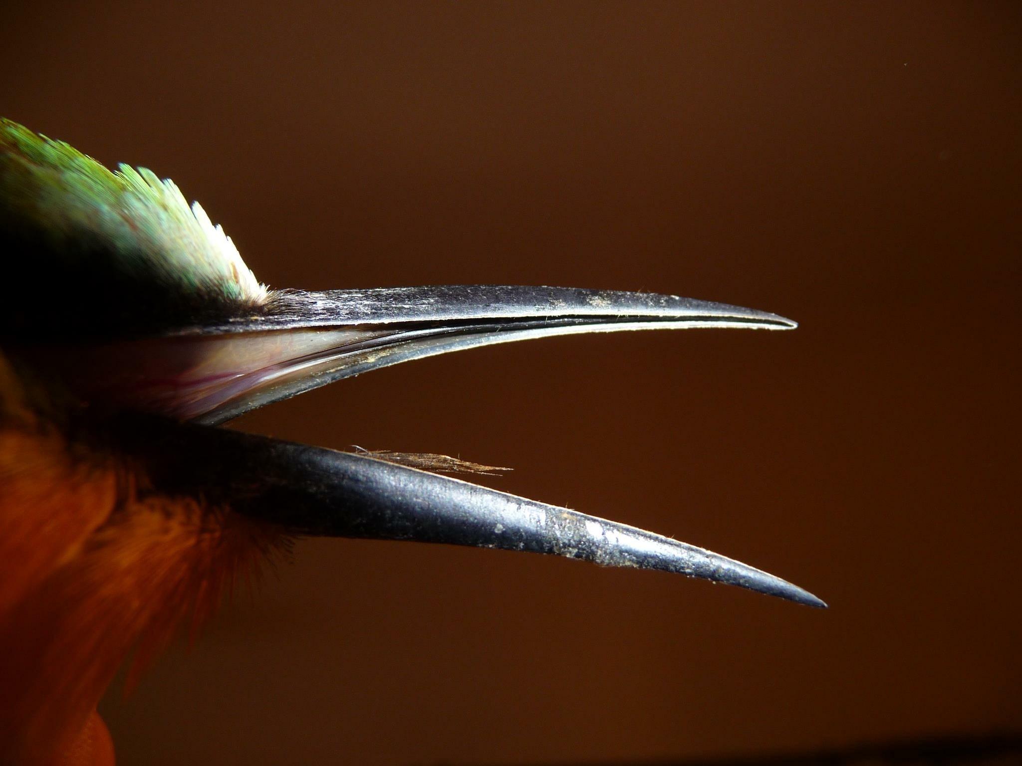 close up photo of black bird beak