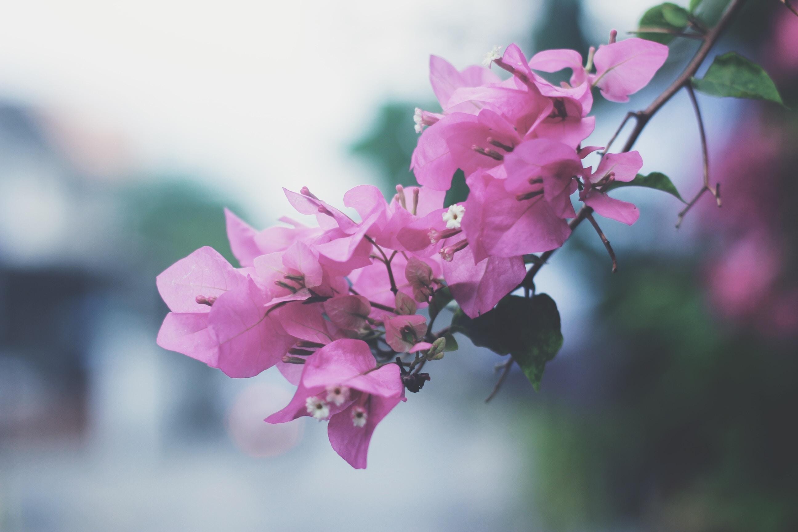 Flower Wallpaper · · Free Stock