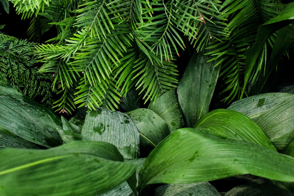 linear green leafed plants