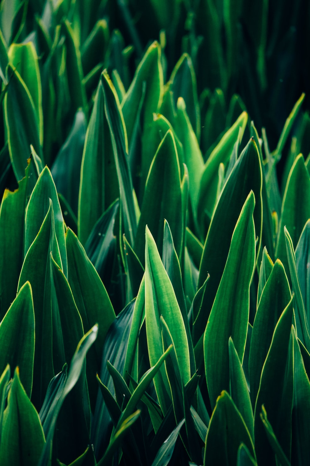 green linear leafed plants