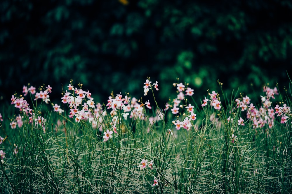 Natural Images To Download