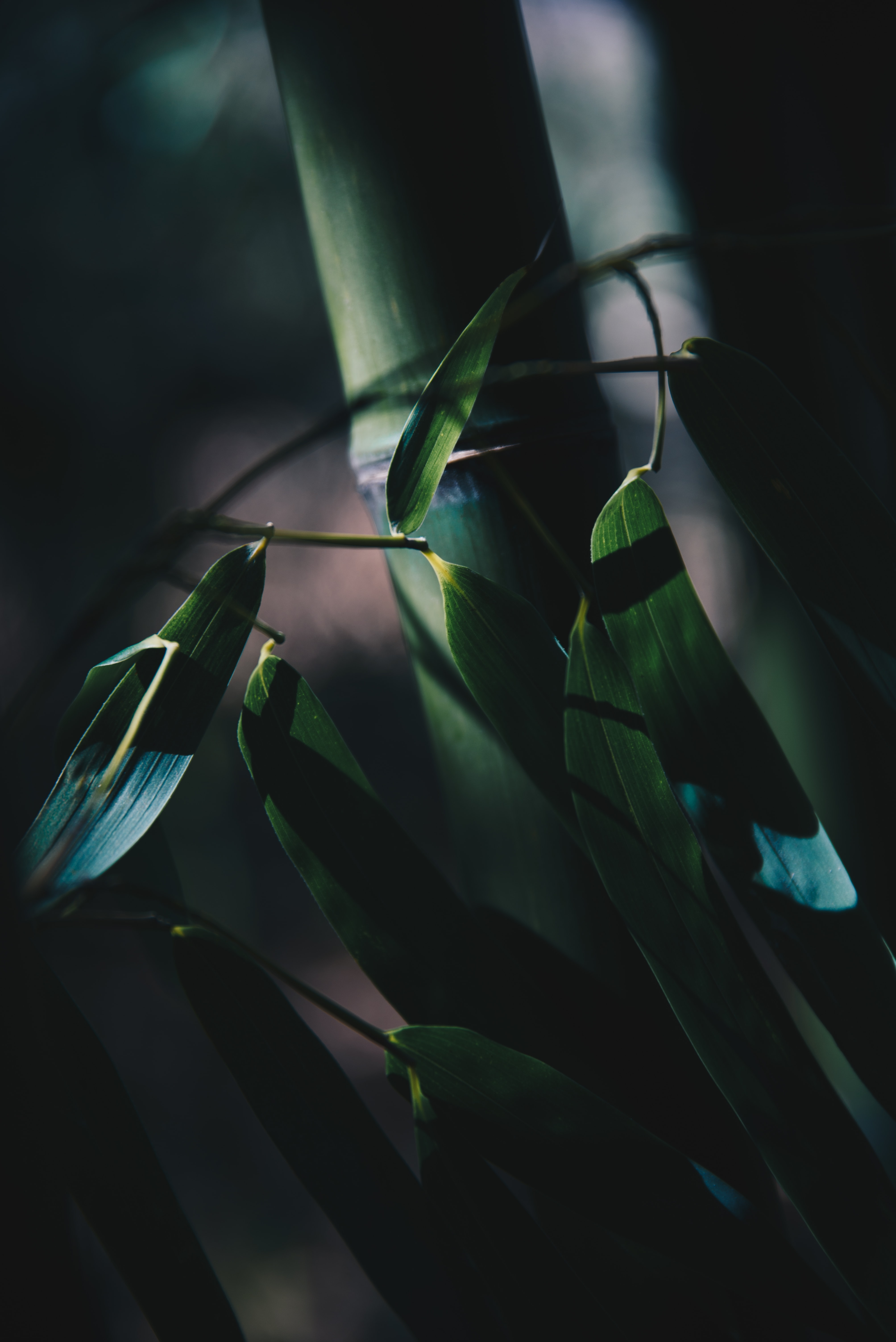 shadow photography of bamboo grasses