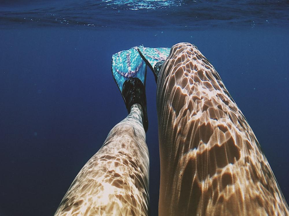 person wearing blue flipper underwater